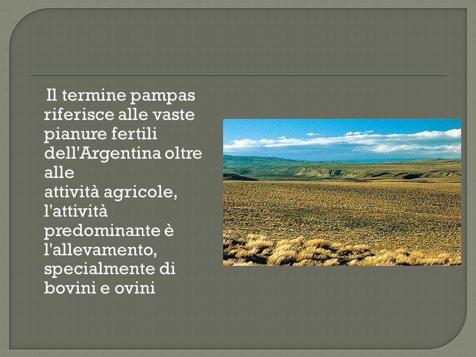 Il termine pampas riferisce alle vaste pianure fertili dell Argentina oltre alle attività agricole, l attività predominante è l allevamento, specialmente di bovini e ovini