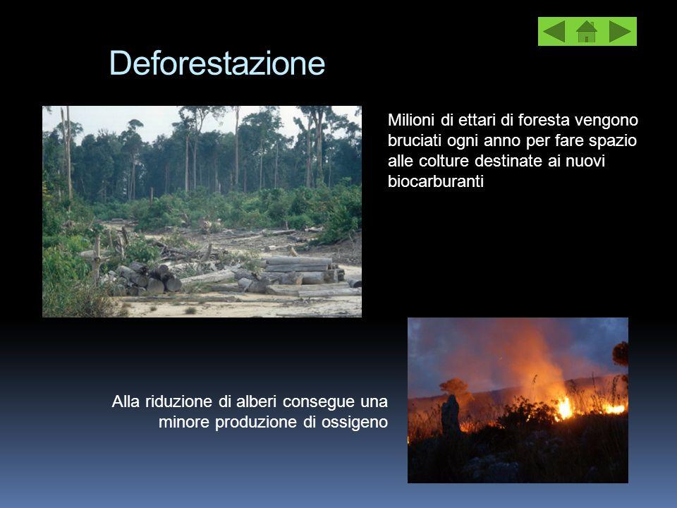 Deforestazione Milioni di ettari di foresta vengono bruciati ogni anno per fare spazio alle colture destinate ai nuovi biocarburanti.