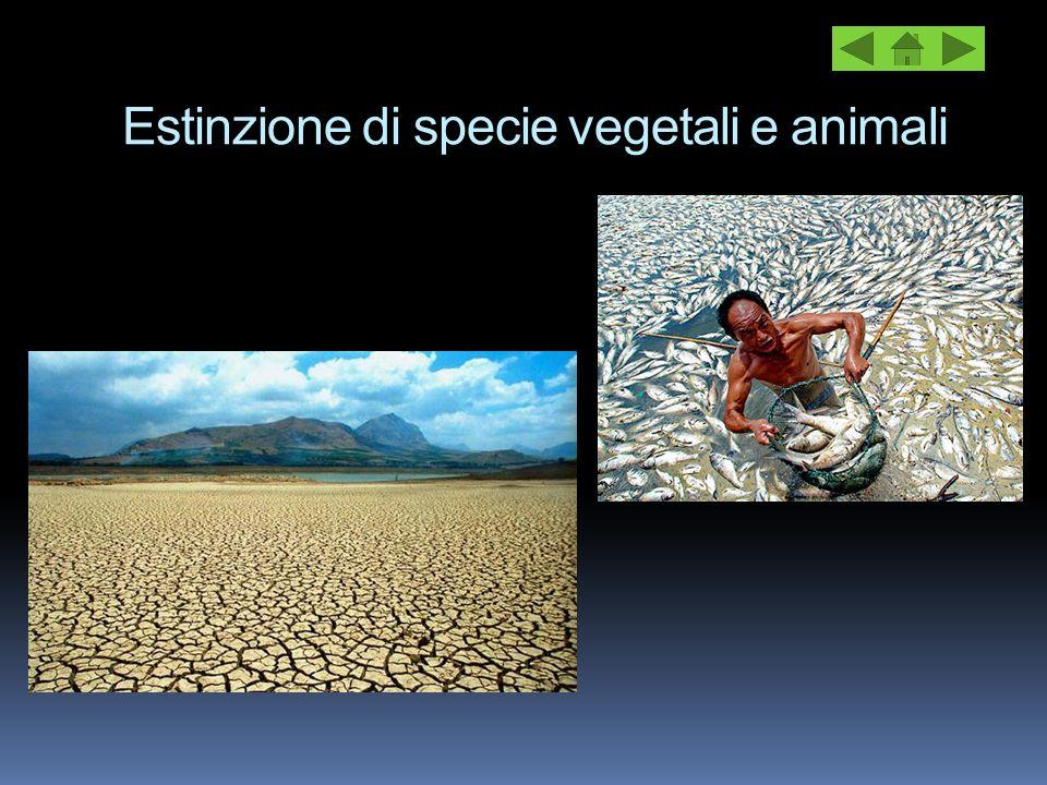Estinzione di specie vegetali e animali