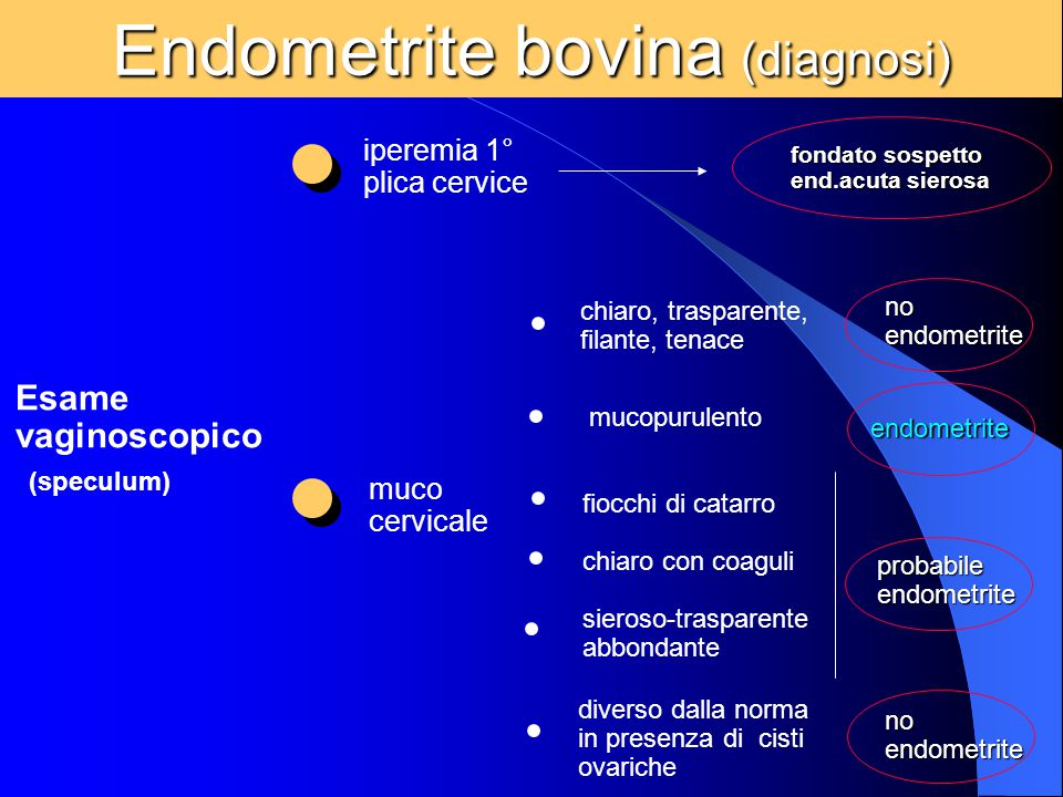 Endometrite bovina (diagnosi)