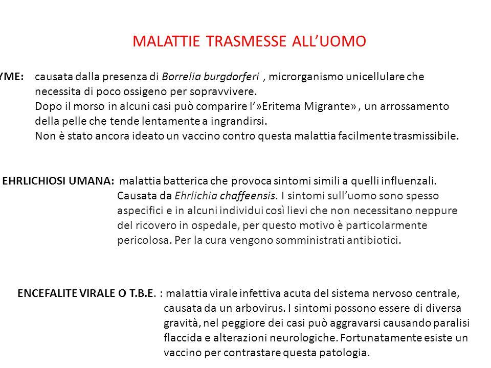 MALATTIE TRASMESSE ALL'UOMO