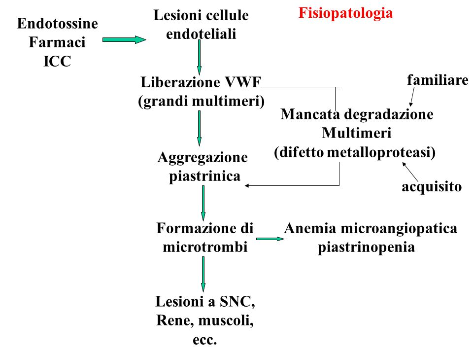 Anemia microangiopatica