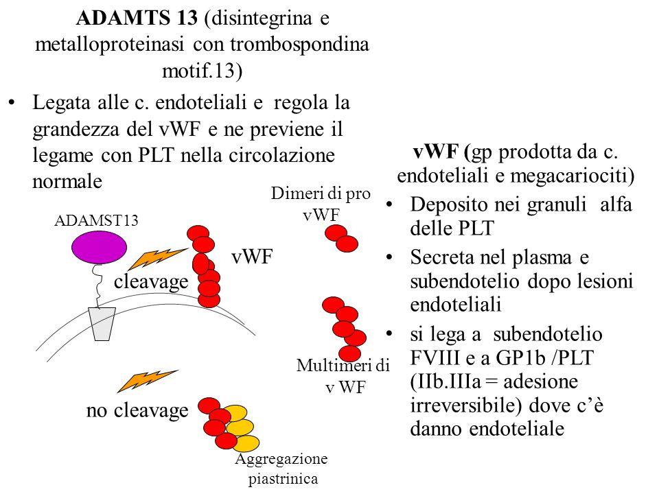 vWF (gp prodotta da c. endoteliali e megacariociti)