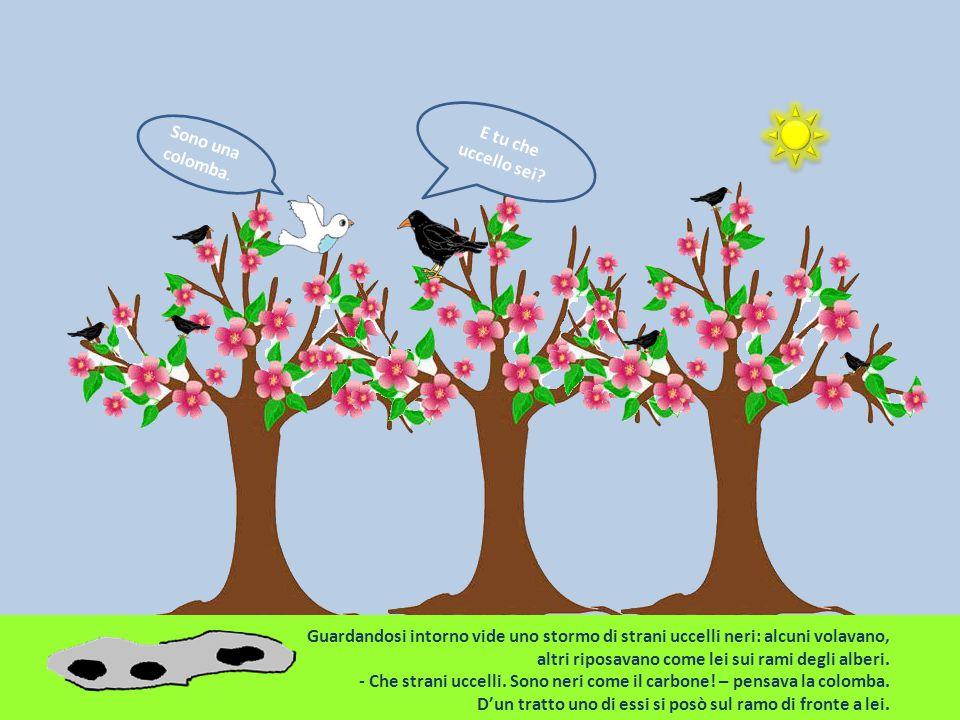 E tu che uccello sei Sono una colomba. Guardandosi intorno vide uno stormo di strani uccelli neri: alcuni volavano,
