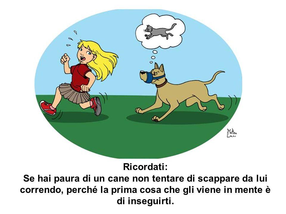 Ricordati: Se hai paura di un cane non tentare di scappare da lui correndo, perché la prima cosa che gli viene in mente è di inseguirti.