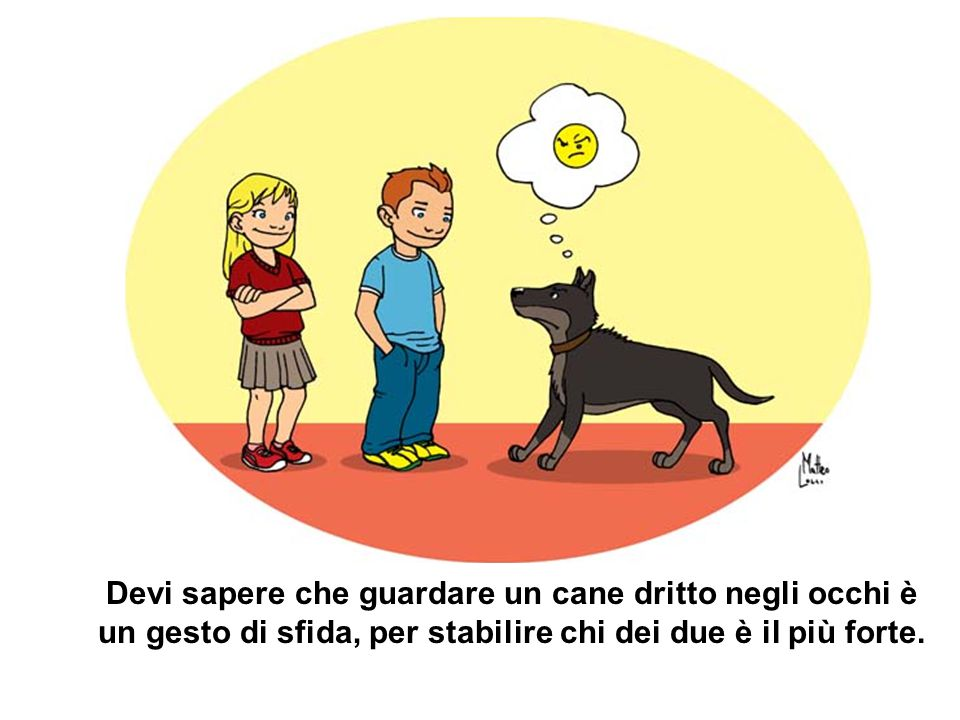 Devi sapere che guardare un cane dritto negli occhi è un gesto di sfida, per stabilire chi dei due è il più forte.