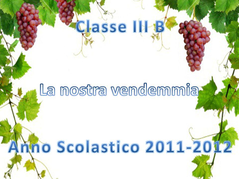 Classe III B La nostra vendemmia Anno Scolastico 2011-2012