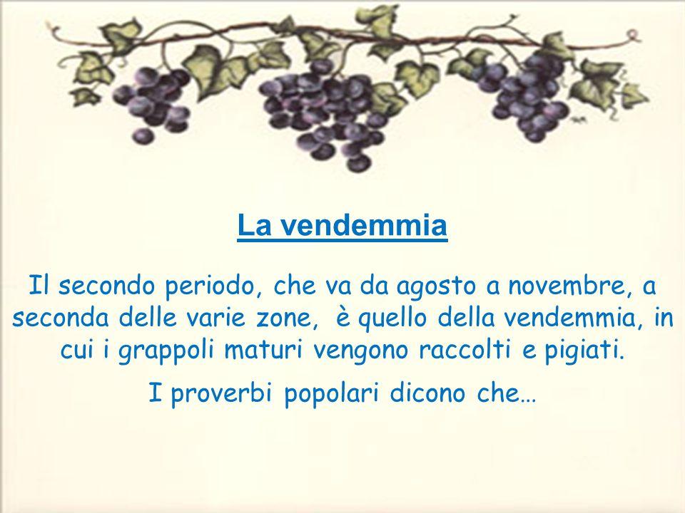 Top Classe III B La nostra vendemmia Anno Scolastico ppt video online  PI74