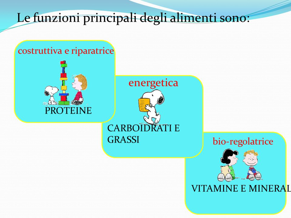 Le funzioni principali degli alimenti sono: