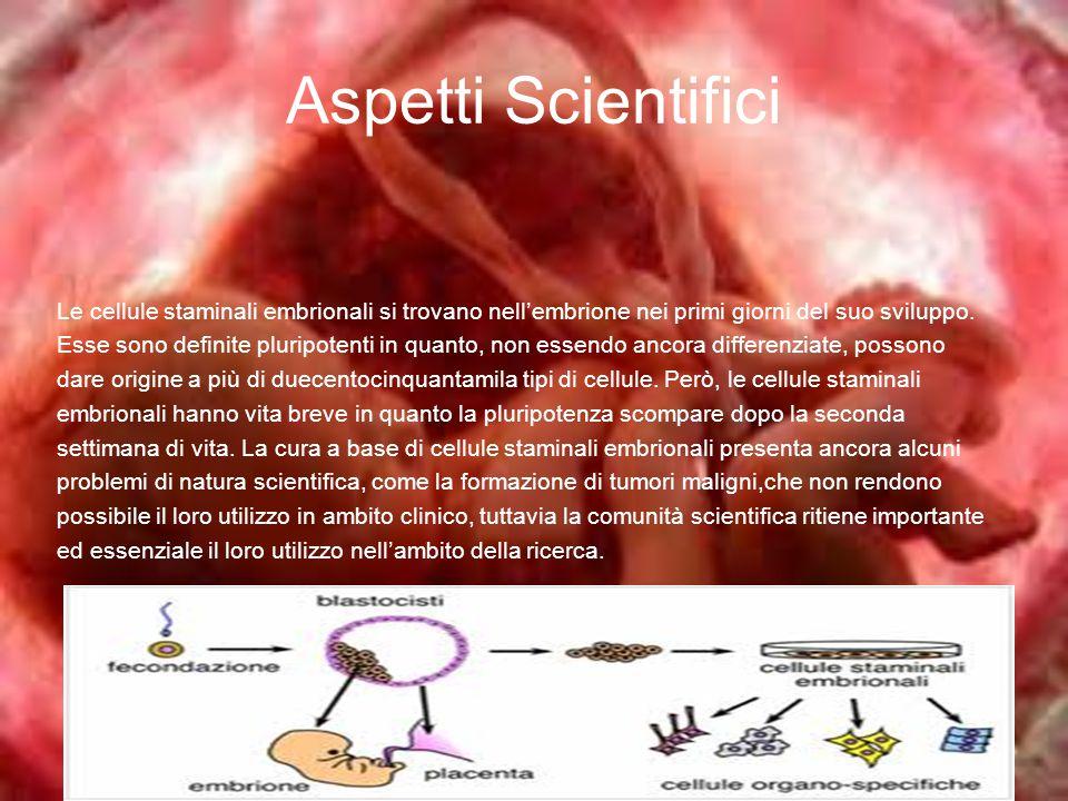 Aspetti Scientifici Le cellule staminali embrionali si trovano nell'embrione nei primi giorni del suo sviluppo.