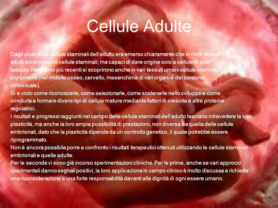 Cellule Adulte Dagli studi delle cellule staminali dell'adulto era emerso chiaramente che in molti tessuti.