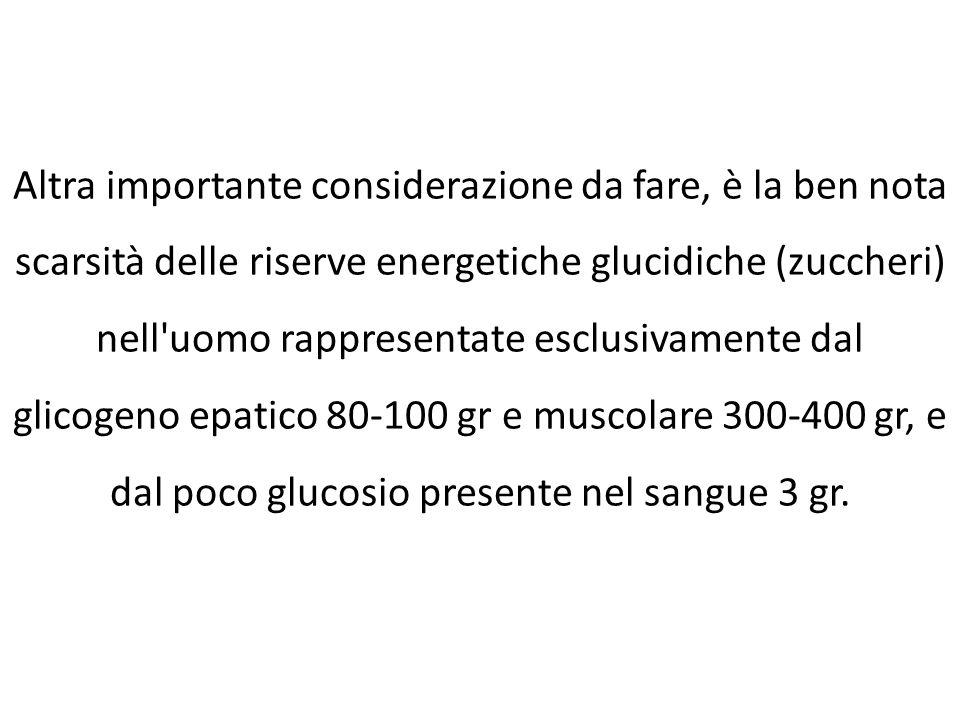 Altra importante considerazione da fare, è la ben nota scarsità delle riserve energetiche glucidiche (zuccheri) nell uomo rappresentate esclusivamente dal glicogeno epatico 80-100 gr e muscolare 300-400 gr, e dal poco glucosio presente nel sangue 3 gr.