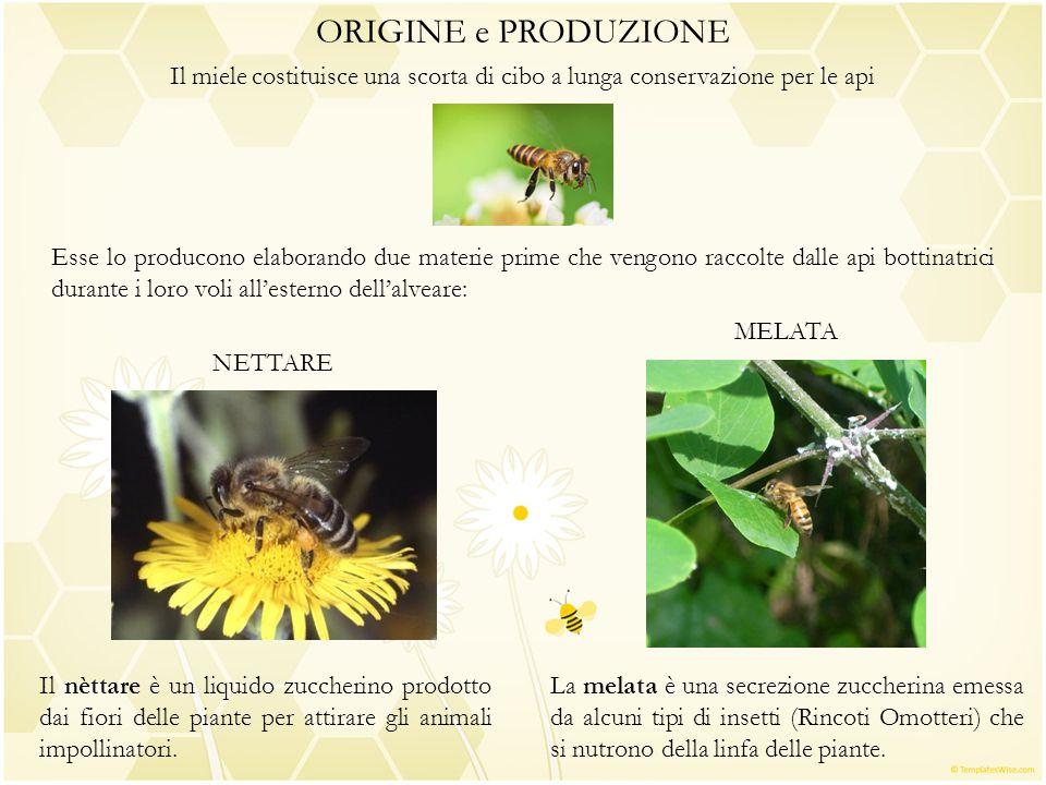 ORIGINE e PRODUZIONE Il miele costituisce una scorta di cibo a lunga conservazione per le api.