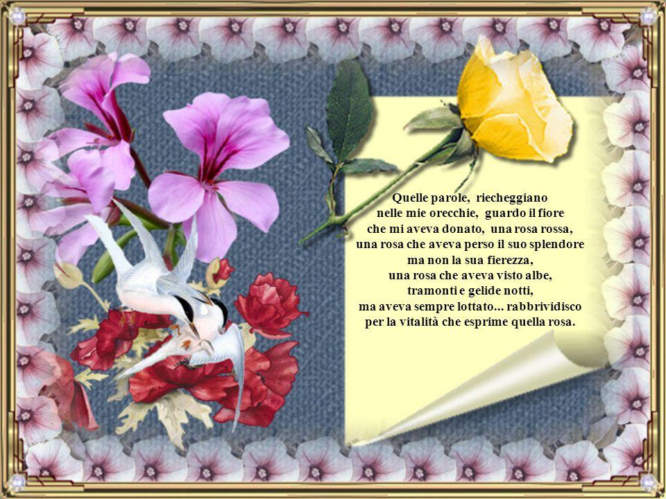 Quelle parole, riecheggiano nelle mie orecchie, guardo il fiore che mi aveva donato, una rosa rossa, una rosa che aveva perso il suo splendore ma non la sua fierezza, una rosa che aveva visto albe, tramonti e gelide notti, ma aveva sempre lottato...