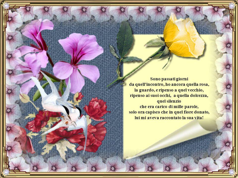 Sono passati giorni da quell incontro, ho ancora quella rosa, la guardo, e ripenso a quel vecchio, ripenso ai suoi occhi, a quella dolcezza, quel silenzio che era carico di mille parole, solo ora capisco che in quel fiore donato, lui mi aveva raccontato la sua vita!