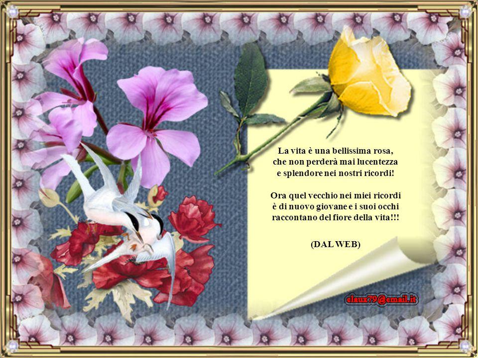 La vita è una bellissima rosa, che non perderà mai lucentezza e splendore nei nostri ricordi! Ora quel vecchio nei miei ricordi è di nuovo giovane e i suoi occhi raccontano del fiore della vita!!!