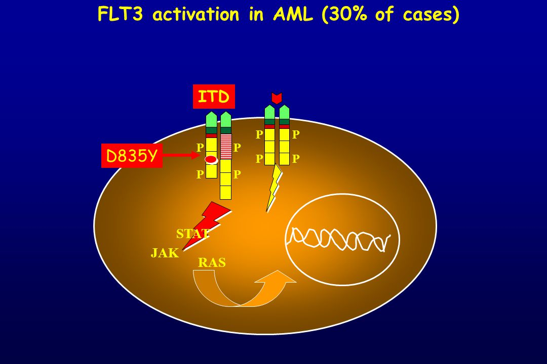 FLT3 activation in AML (30% of cases)