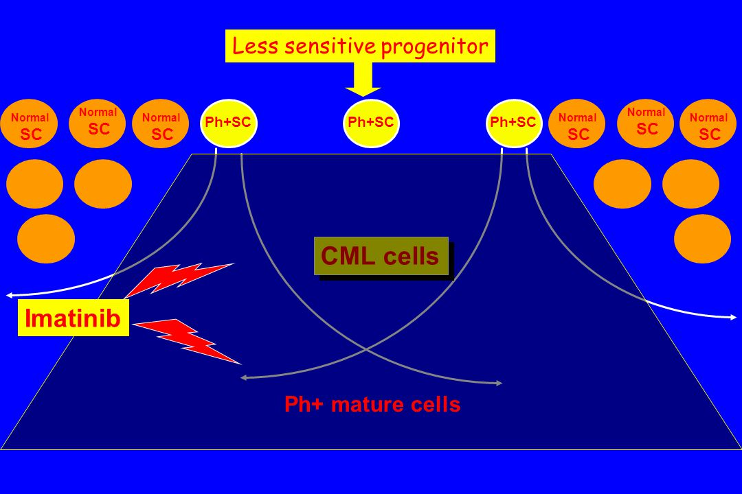 CML cells Imatinib Less sensitive progenitor Ph+ progenitors