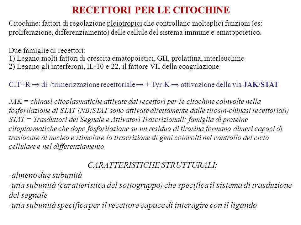 RECETTORI PER LE CITOCHINE