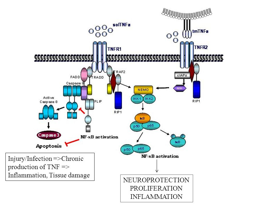 Injury/Infection =>Chronic production of TNF => Inflammation, Tissue damage