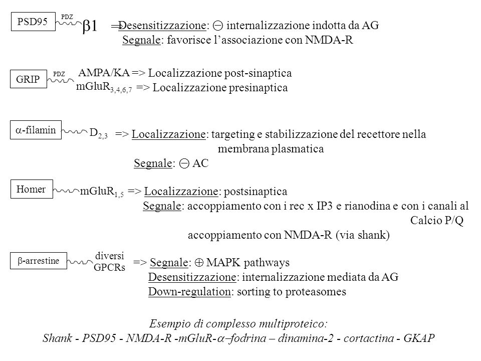 b1 Desensitizzazione: ⊝ internalizzazione indotta da AG