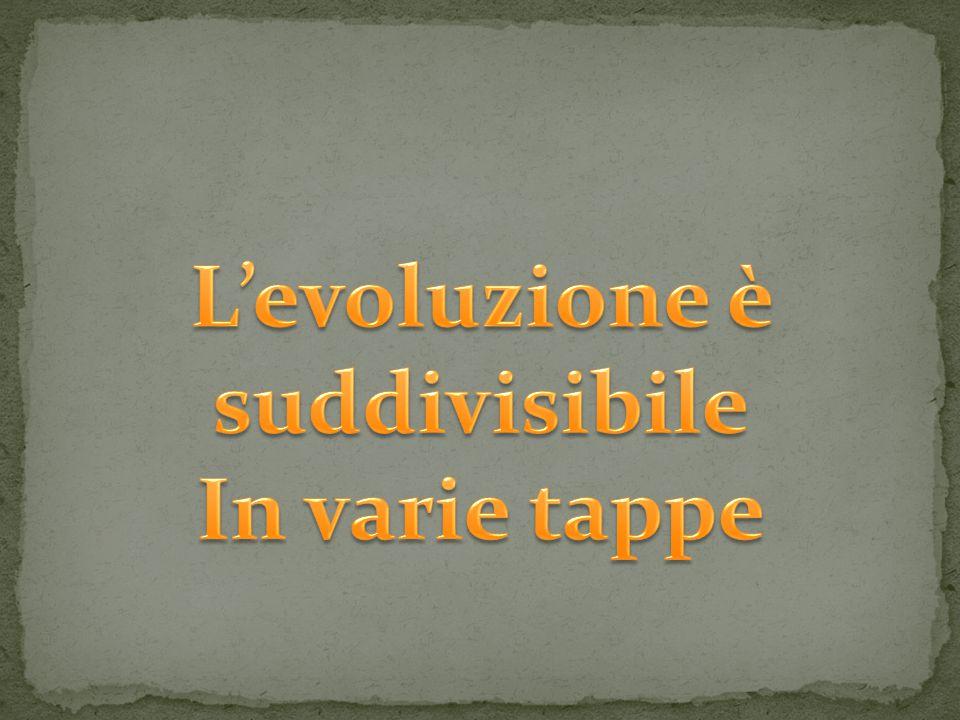 L'evoluzione è suddivisibile