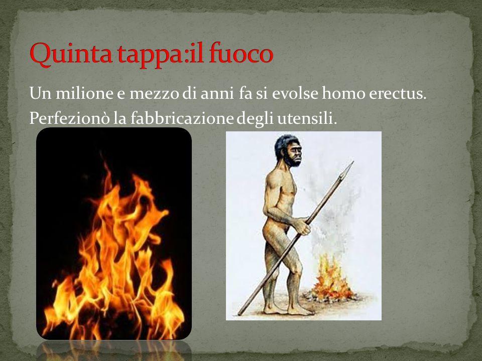 Quinta tappa:il fuoco Un milione e mezzo di anni fa si evolse homo erectus.