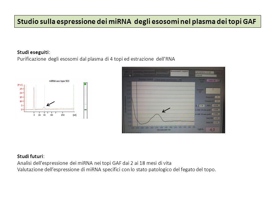 Studio sulla espressione dei miRNA degli esosomi nel plasma dei topi GAF