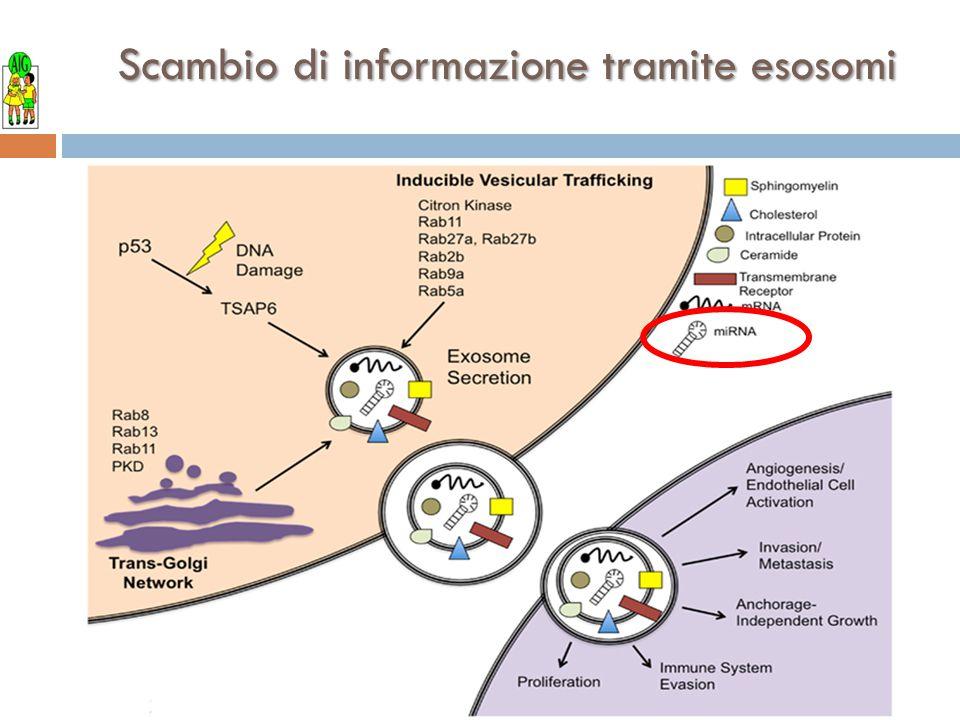 Scambio di informazione tramite esosomi
