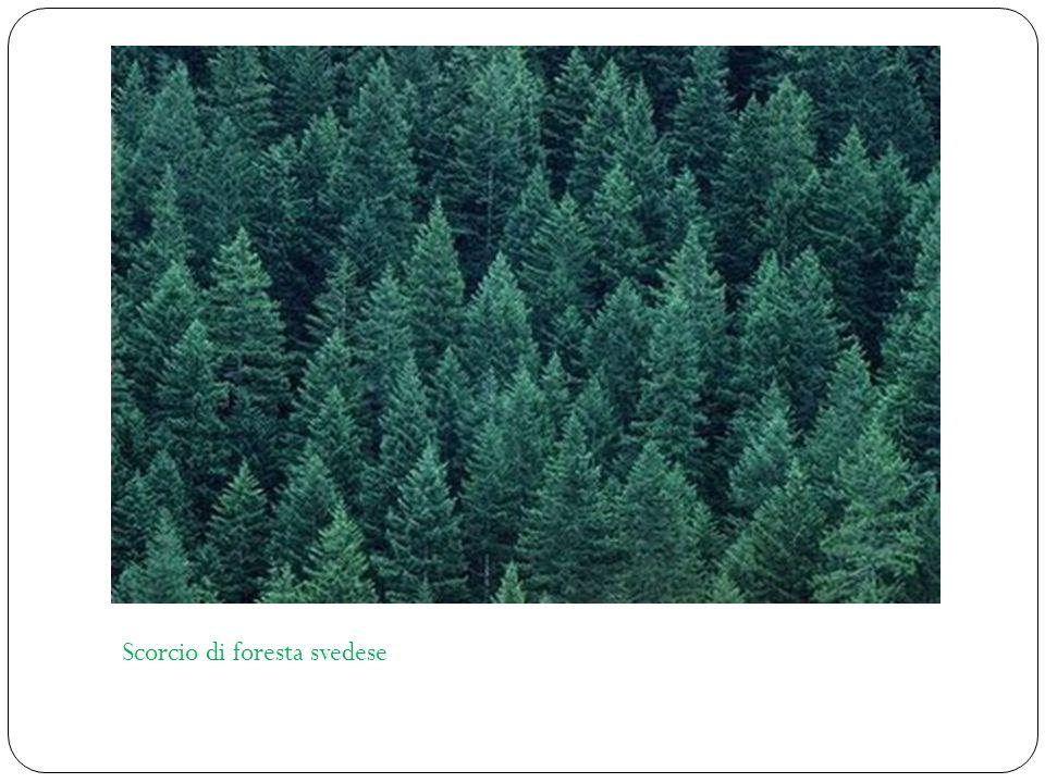 Scorcio di foresta svedese