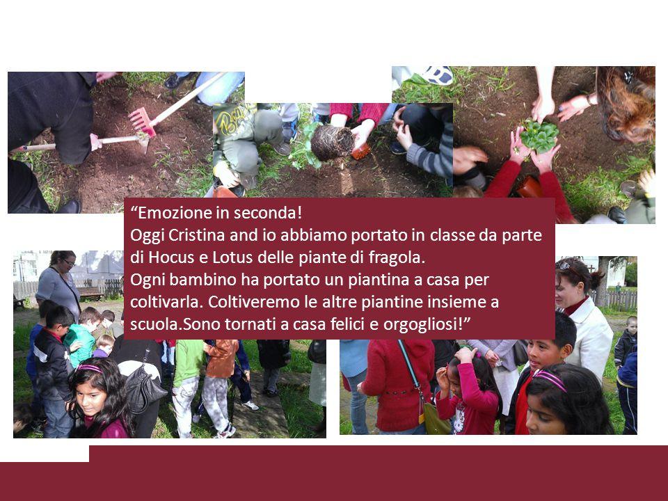 Emozione in seconda! Oggi Cristina and io abbiamo portato in classe da parte di Hocus e Lotus delle piante di fragola.