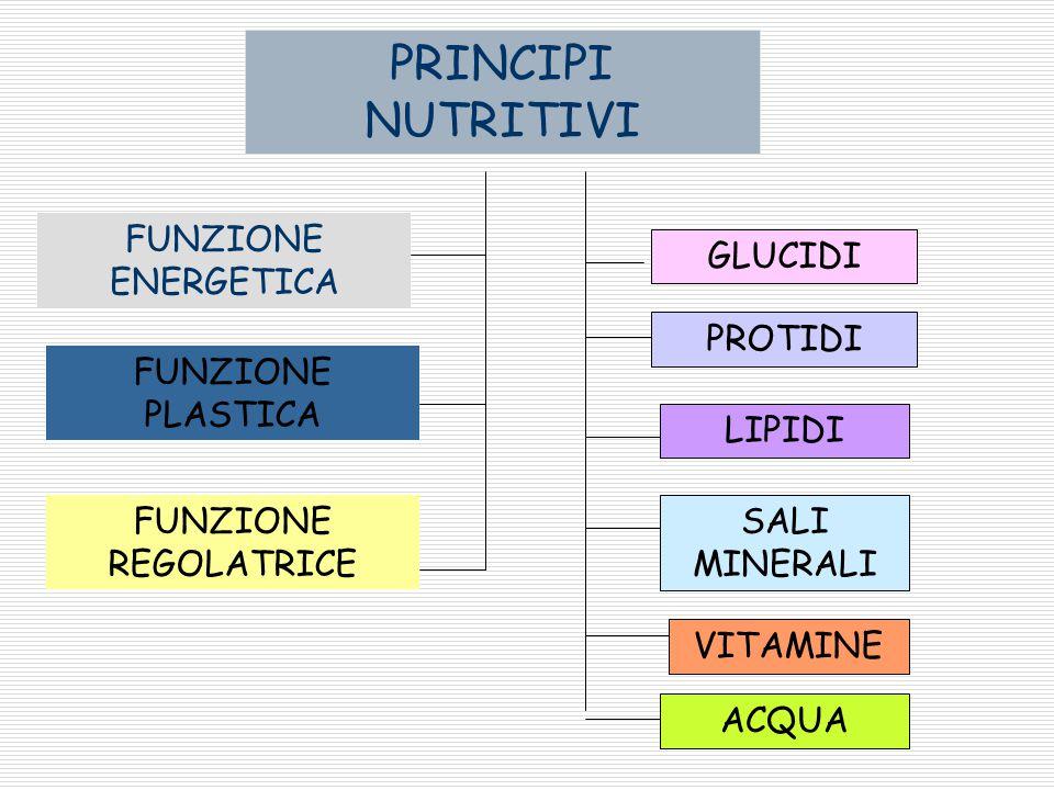PRINCIPI NUTRITIVI FUNZIONE ENERGETICA GLUCIDI PROTIDI