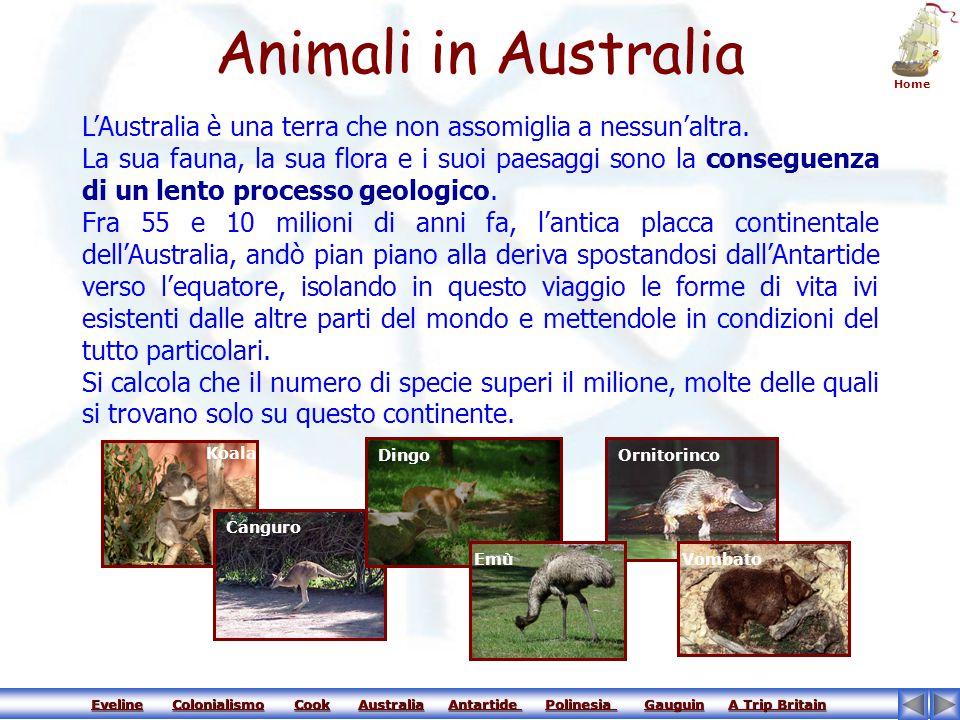 Animali in Australia Home. L'Australia è una terra che non assomiglia a nessun'altra.