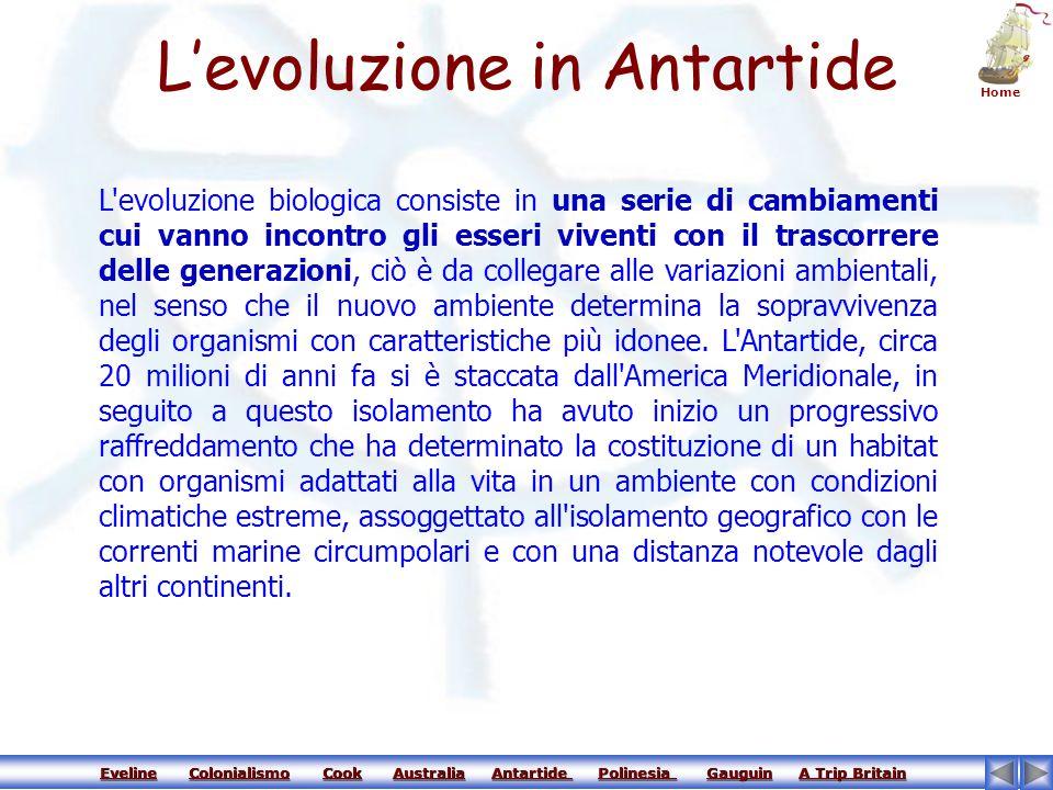 L'evoluzione in Antartide
