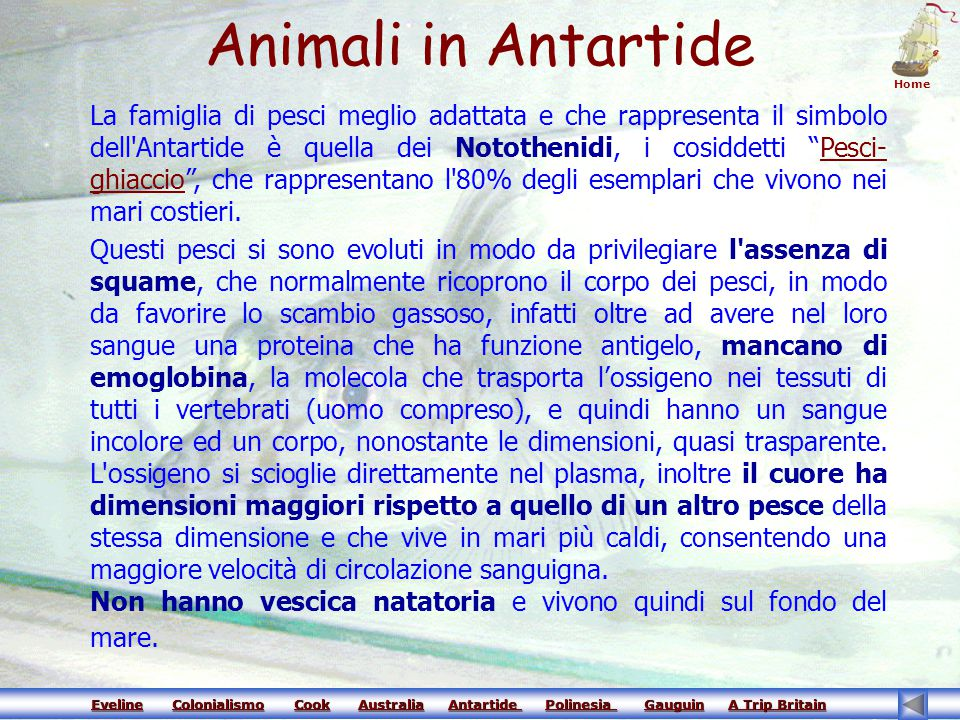 Animali in Antartide Home.