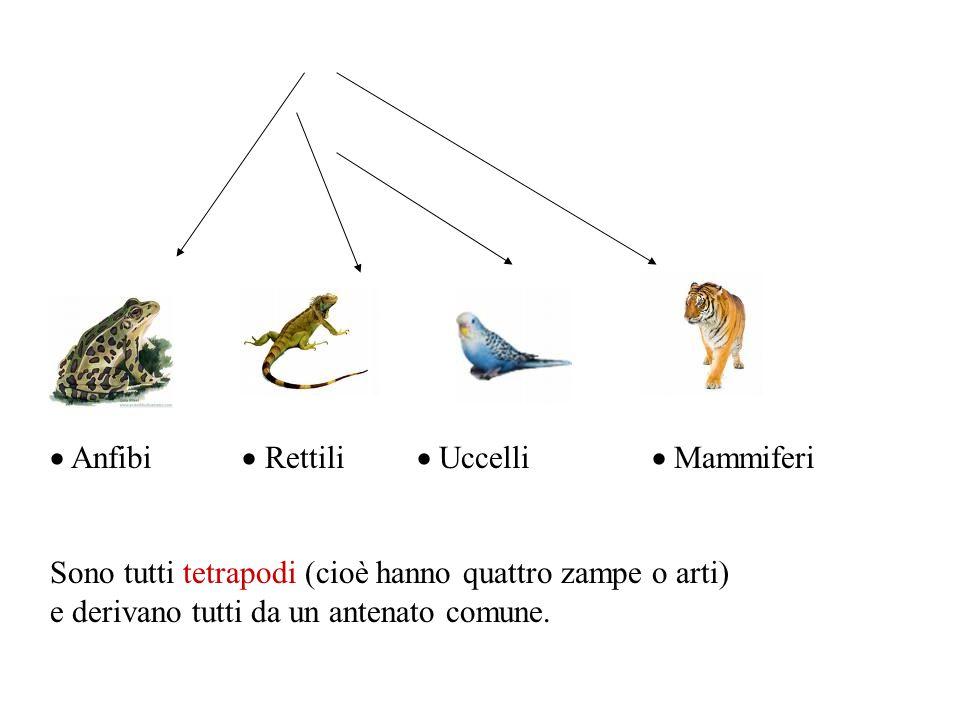  Anfibi  Rettili  Uccelli  Mammiferi
