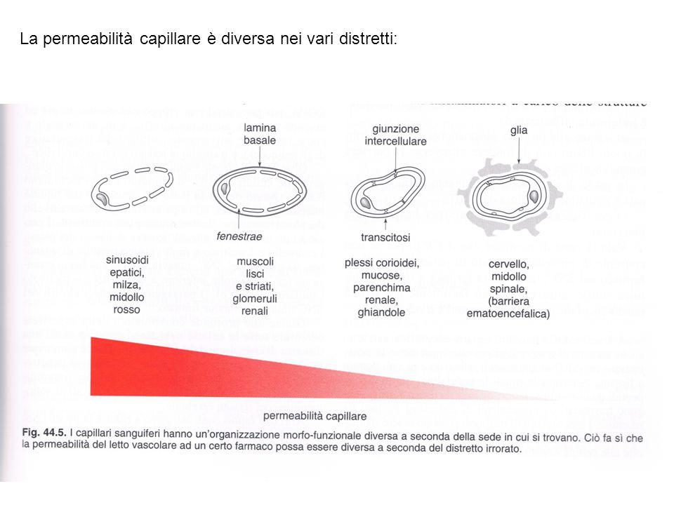 La permeabilità capillare è diversa nei vari distretti: