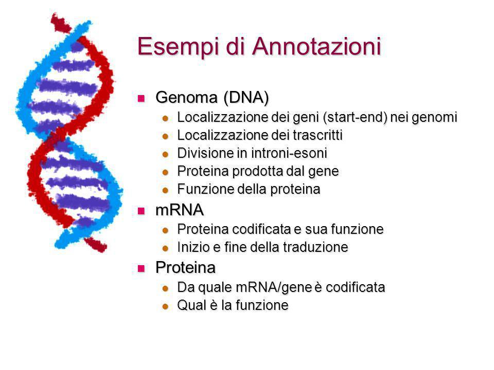 Esempi di Annotazioni Genoma (DNA) mRNA Proteina