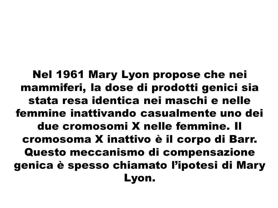 Nel 1961 Mary Lyon propose che nei mammiferi, la dose di prodotti genici sia stata resa identica nei maschi e nelle femmine inattivando casualmente uno dei due cromosomi X nelle femmine.