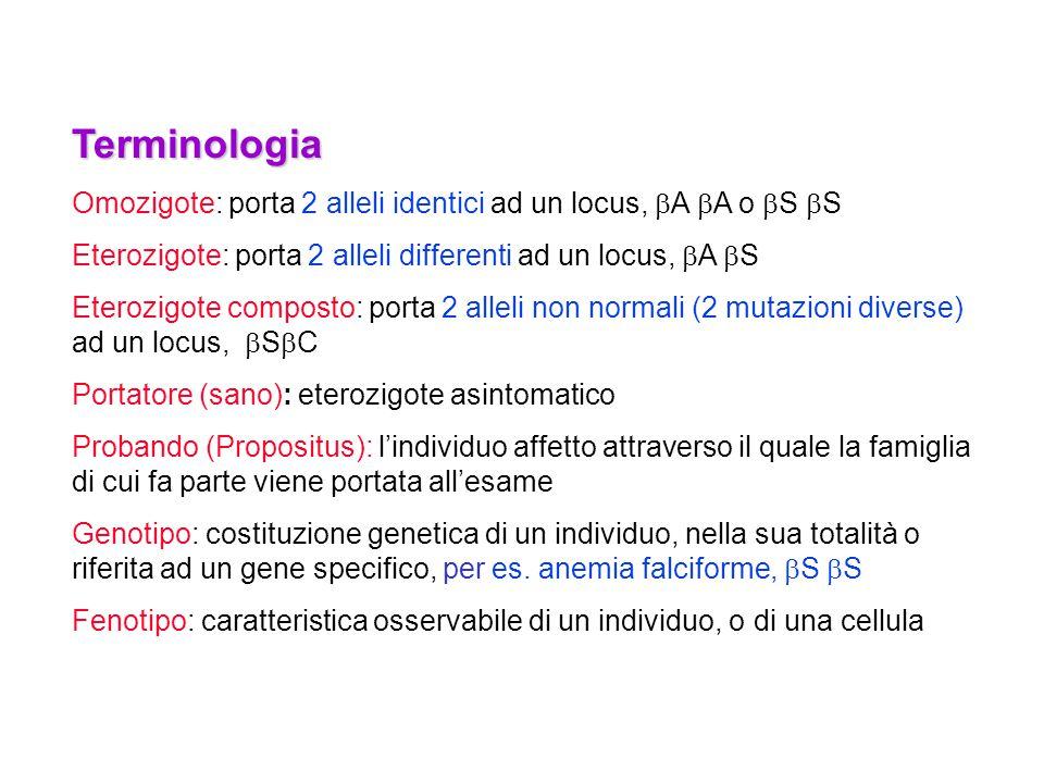 Terminologia Omozigote: porta 2 alleli identici ad un locus, bA bA o bS bS. Eterozigote: porta 2 alleli differenti ad un locus, bA bS.