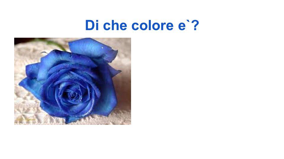 Di che colore e`