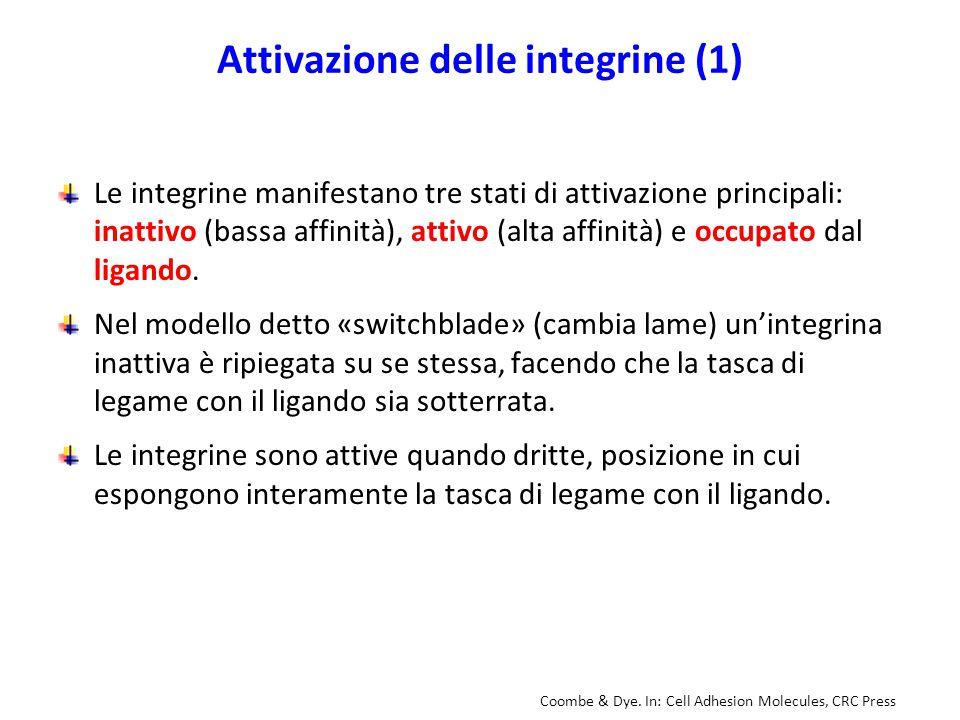 Attivazione delle integrine (1)