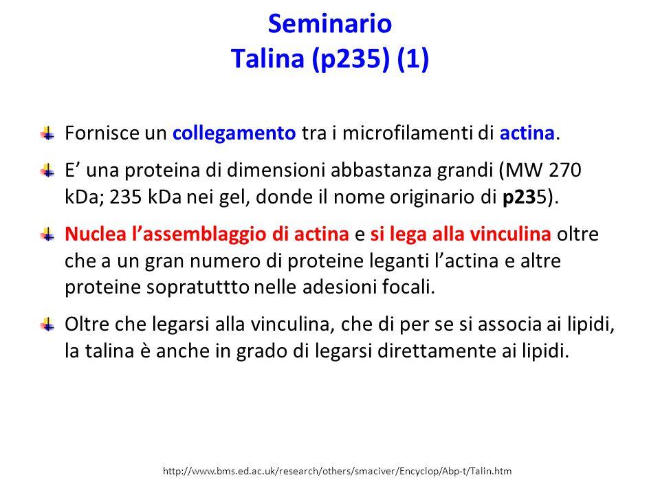 Seminario Talina (p235) (1)