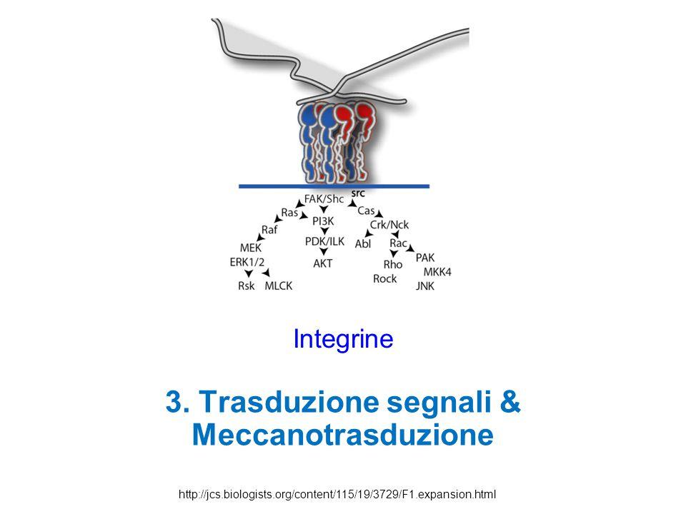 3. Trasduzione segnali & Meccanotrasduzione