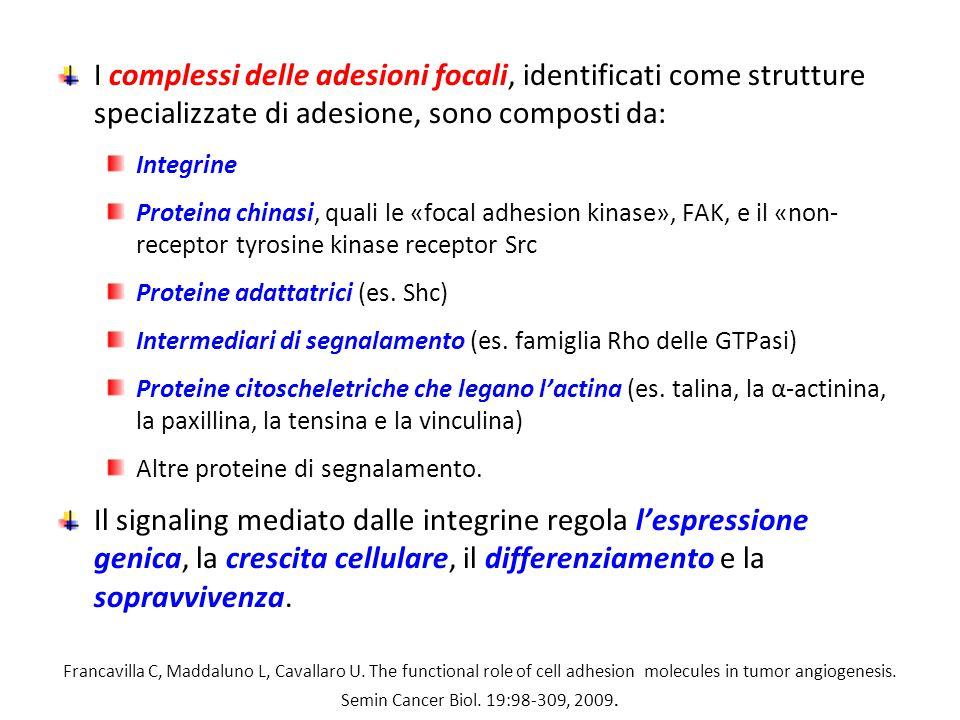 I complessi delle adesioni focali, identificati come strutture specializzate di adesione, sono composti da: