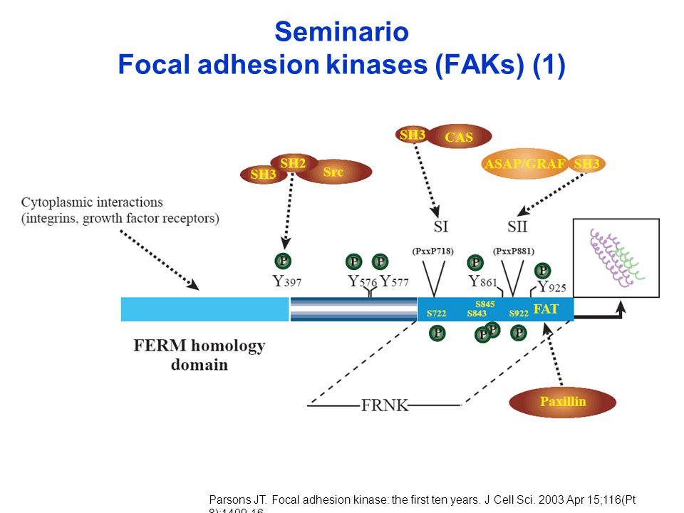 Seminario Focal adhesion kinases (FAKs) (1)