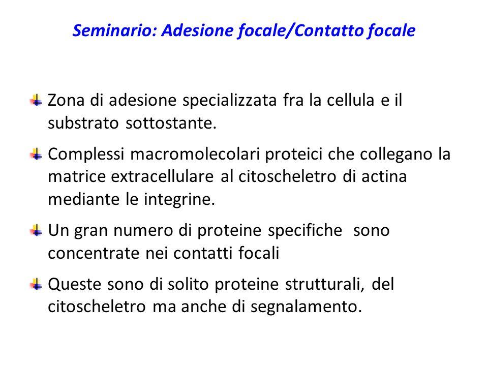 Seminario: Adesione focale/Contatto focale