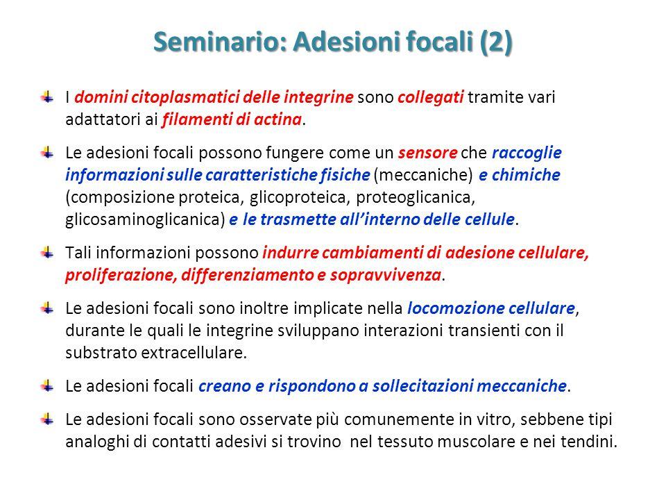Seminario: Adesioni focali (2)