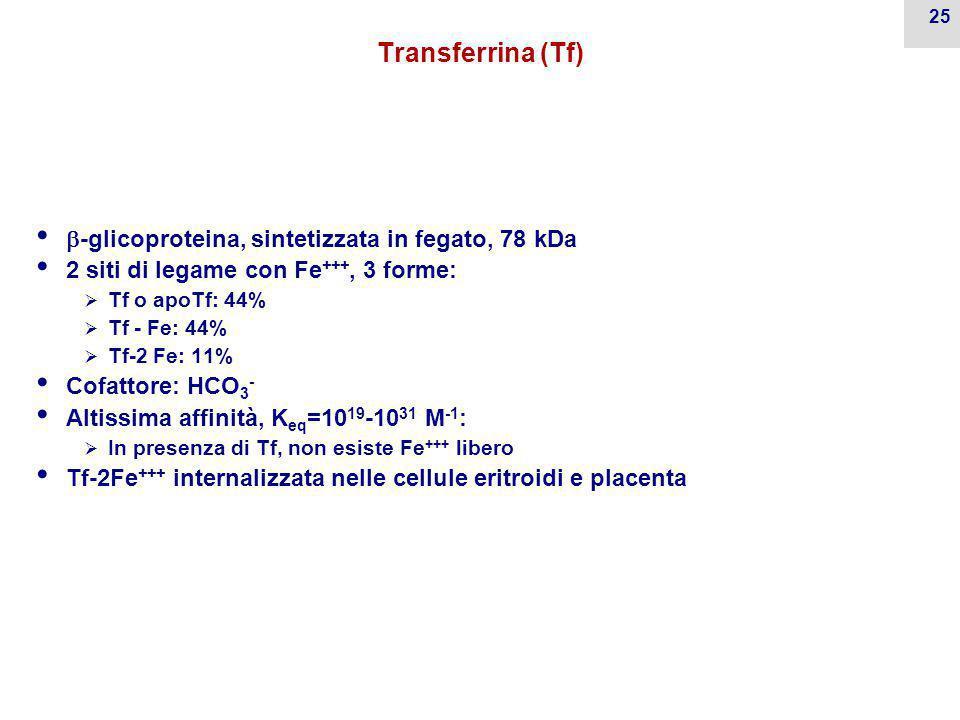 Transferrina (Tf) -glicoproteina, sintetizzata in fegato, 78 kDa