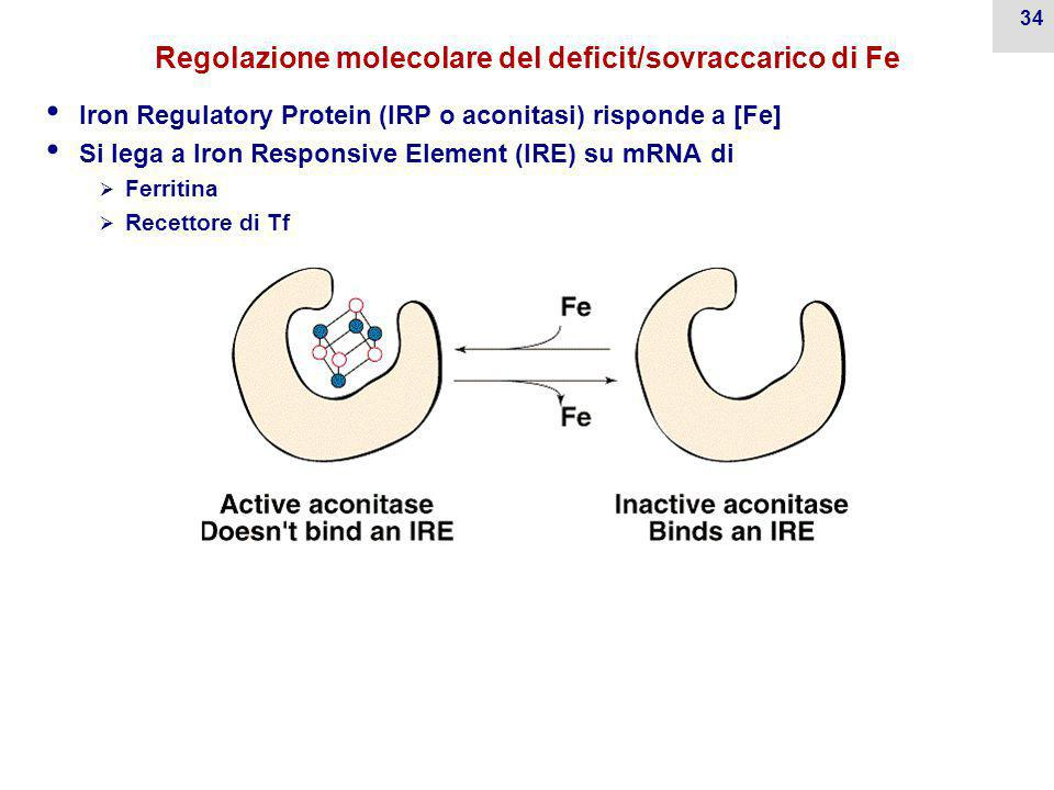 Regolazione molecolare del deficit/sovraccarico di Fe